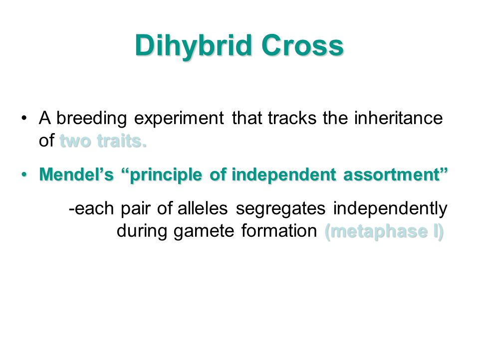 Dihybrid Cross two traits.A breeding experiment that tracks the inheritance of two traits. Mendels principle of independent assortmentMendels principl