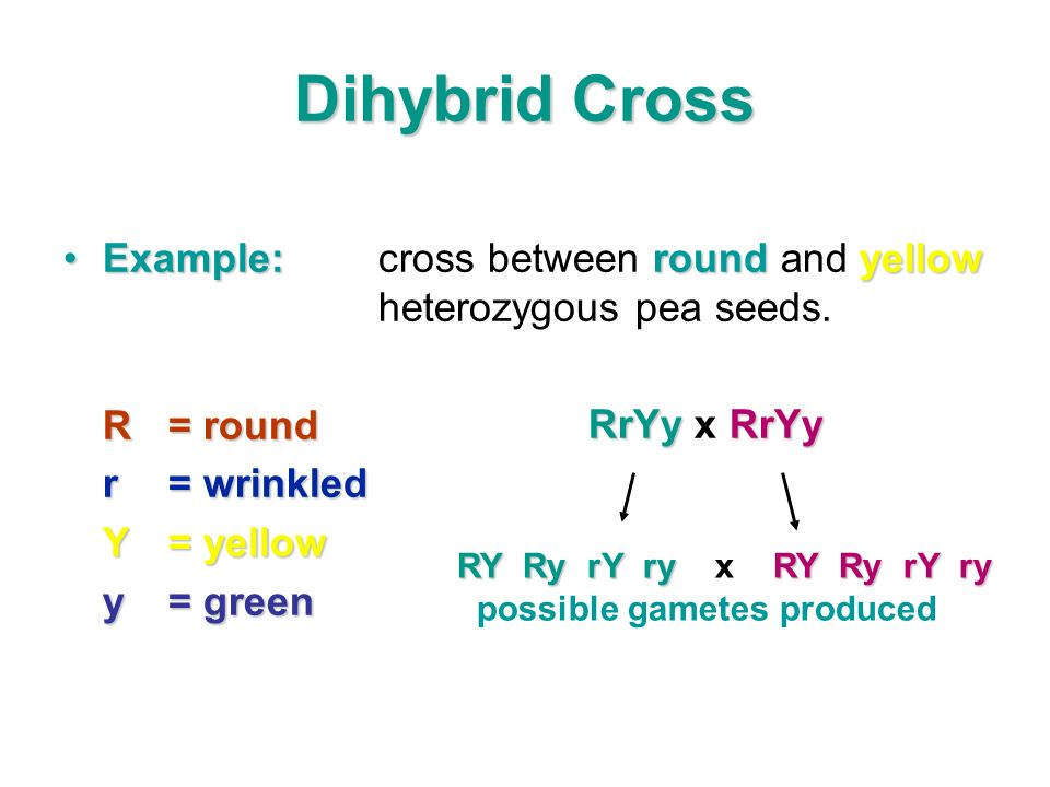 Dihybrid Cross Example:roundyellowExample:cross between round and yellow heterozygous pea seeds. R= round r= wrinkled Y= yellow y= green RY Ry rY ry R