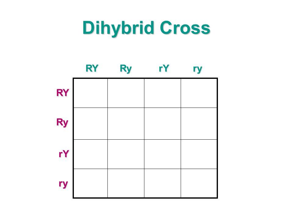 Dihybrid Cross RYRyrYry RYRy rY ry