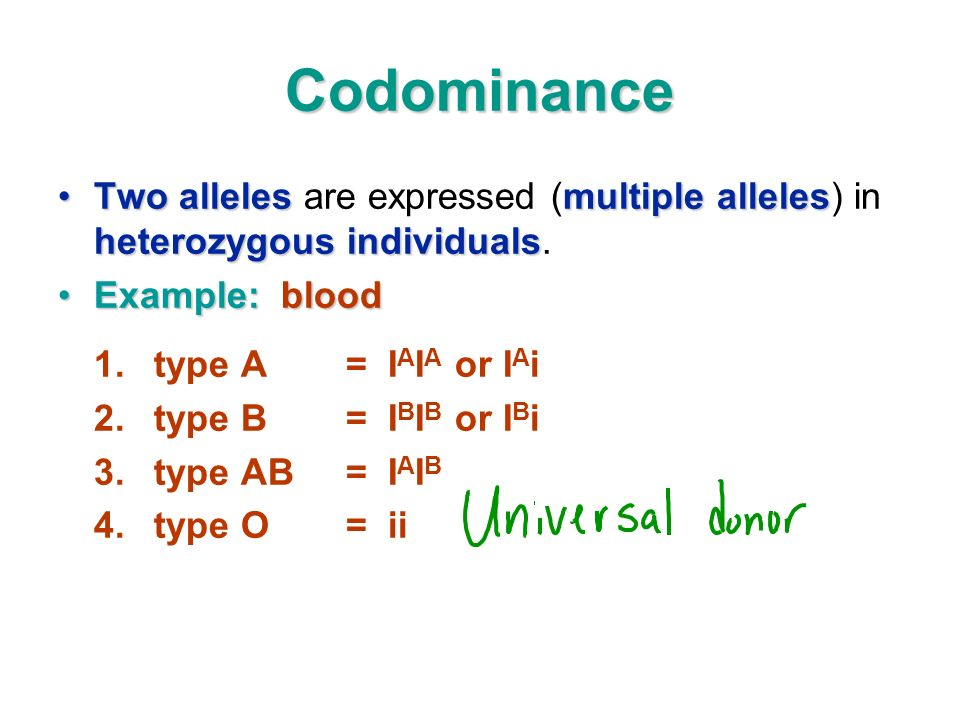 Codominance Two allelesmultiple alleles heterozygous individualsTwo alleles are expressed (multiple alleles) in heterozygous individuals.