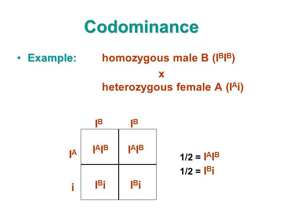 Codominance Example:Example:homozygous male B (I B I B ) x heterozygous female A (I A i) IAIBIAIB IAIBIAIB IBiIBiIBiIBi 1/2 = I A I B 1/2 = I B i IAIA IBIB IBIB i