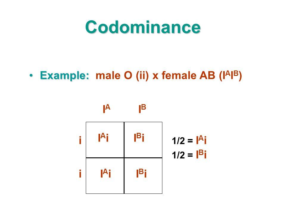 Codominance Example:Example: male O (ii) x female AB (I A I B ) IAiIAiIBiIBi IAiIAiIBiIBi 1/2 = I A i 1/2 = I B i i IAIA IBIB i