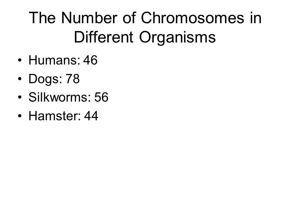The Number of Chromosomes in Different Organisms Humans: 46 Dogs: 78 Silkworms: 56 Hamster: 44
