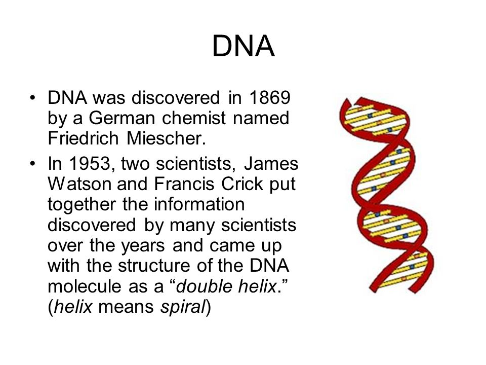 DNA DNA was discovered in 1869 by a German chemist named Friedrich Miescher. In 1953, two scientists, James Watson and Francis Crick put together the