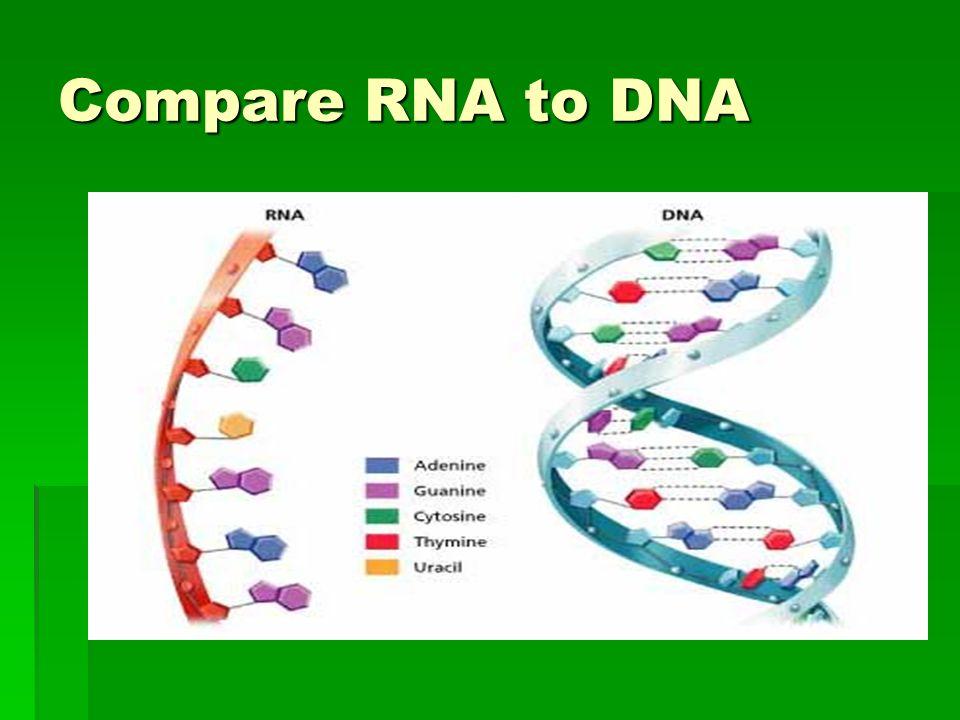Compare RNA to DNA