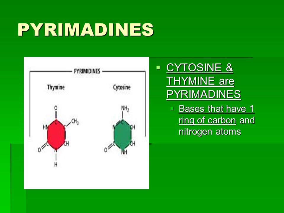 PYRIMADINES CYTOSINE & THYMINE are PYRIMADINES CYTOSINE & THYMINE are PYRIMADINES Bases that have 1 ring of carbon and nitrogen atoms