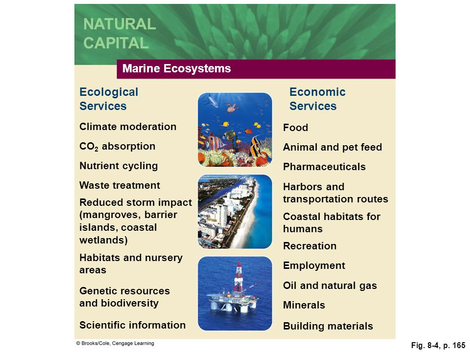 Fig. 8-4, p. 165 Marine Ecosystems Economic Services Climate moderation Food CO 2 absorption Animal and pet feed Nutrient cycling Pharmaceuticals Harb