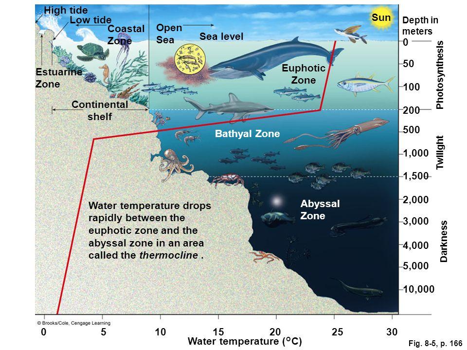 Fig. 8-5, p. 166 Low tide Coastal Zone Open Sea Depth in meters High tide Sun Sea level 50 Estuarine Zone Euphotic Zone 100 Photosynthesis Continental