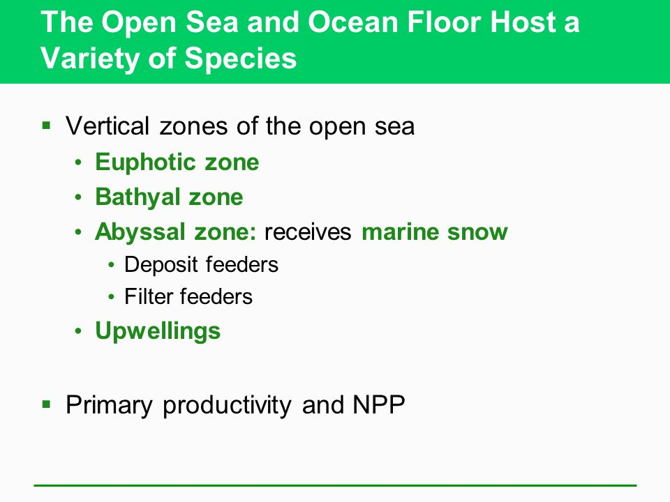 The Open Sea and Ocean Floor Host a Variety of Species Vertical zones of the open sea Euphotic zone Bathyal zone Abyssal zone: receives marine snow De