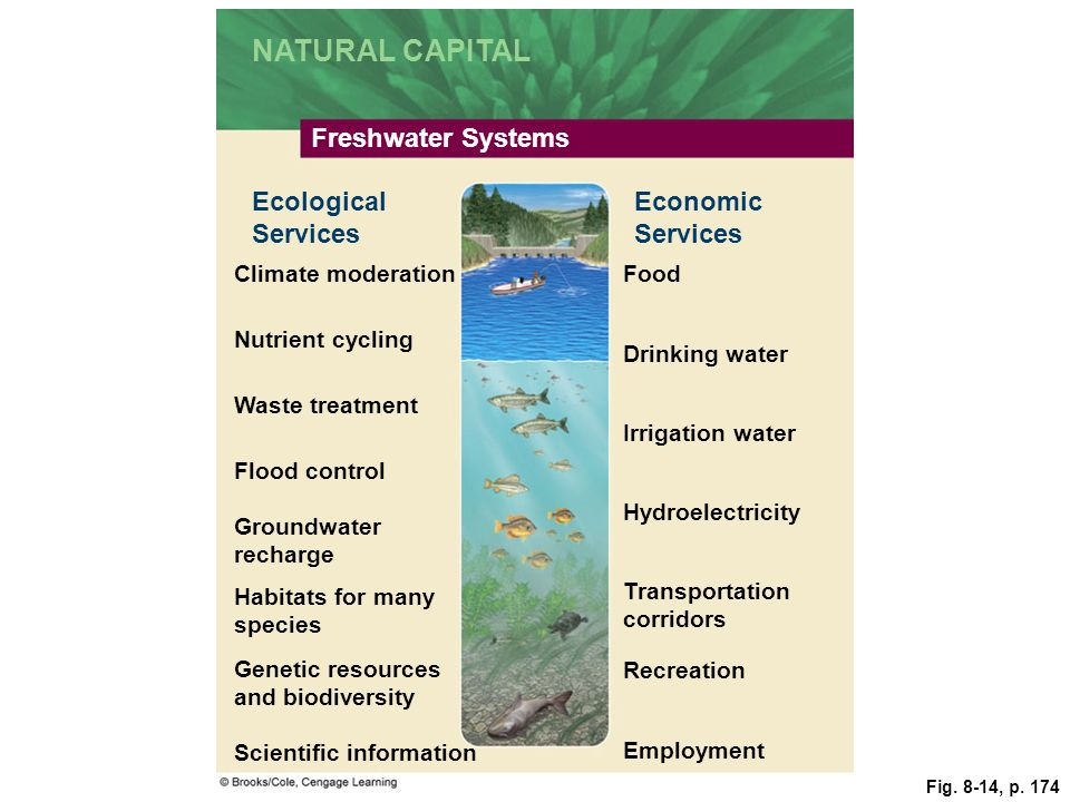 Fig. 8-14, p. 174 NATURAL CAPITAL Freshwater Systems Ecological Services Economic Services Climate moderationFood Nutrient cycling Drinking water Wast