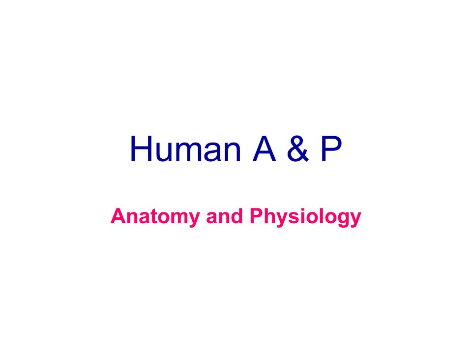 Human A & P Anatomy and Physiology