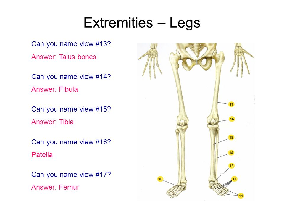 Extremities – Legs Can you name view #13? Answer: Talus bones Can you name view #14? Answer: Fibula Can you name view #15? Answer: Tibia Can you name
