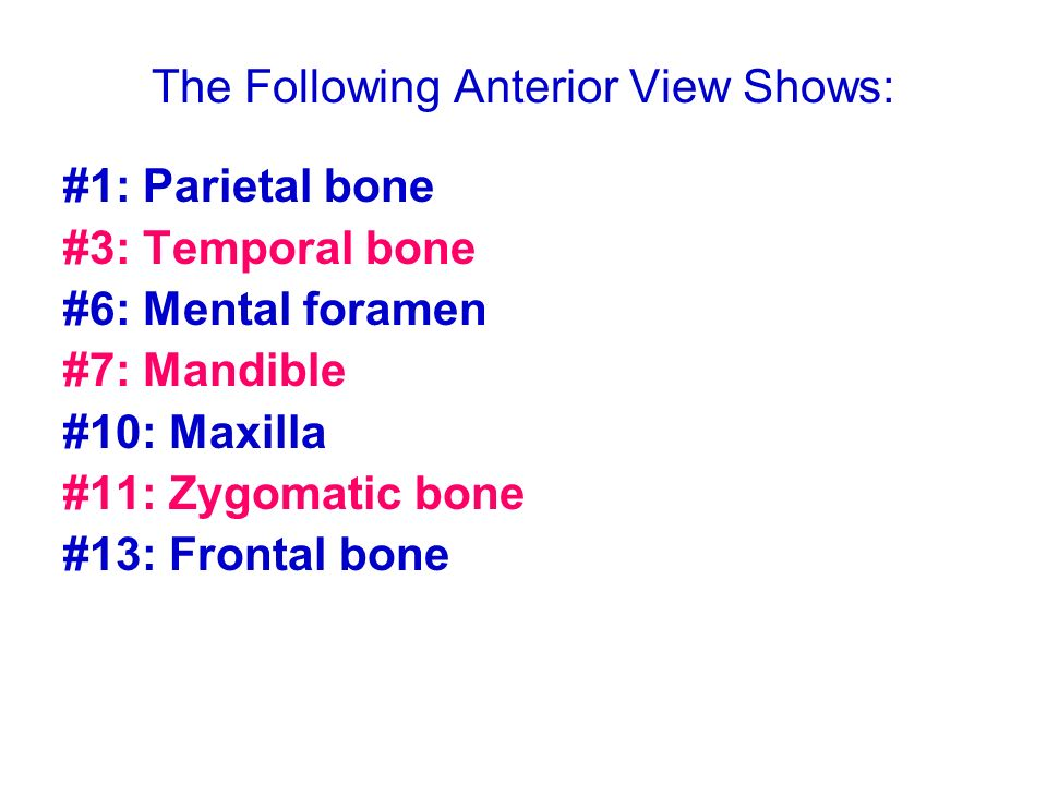 The Following Anterior View Shows: #1: Parietal bone #3: Temporal bone #6: Mental foramen #7: Mandible #10: Maxilla #11: Zygomatic bone #13: Frontal b
