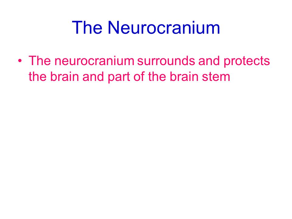 The Neurocranium The neurocranium surrounds and protects the brain and part of the brain stem