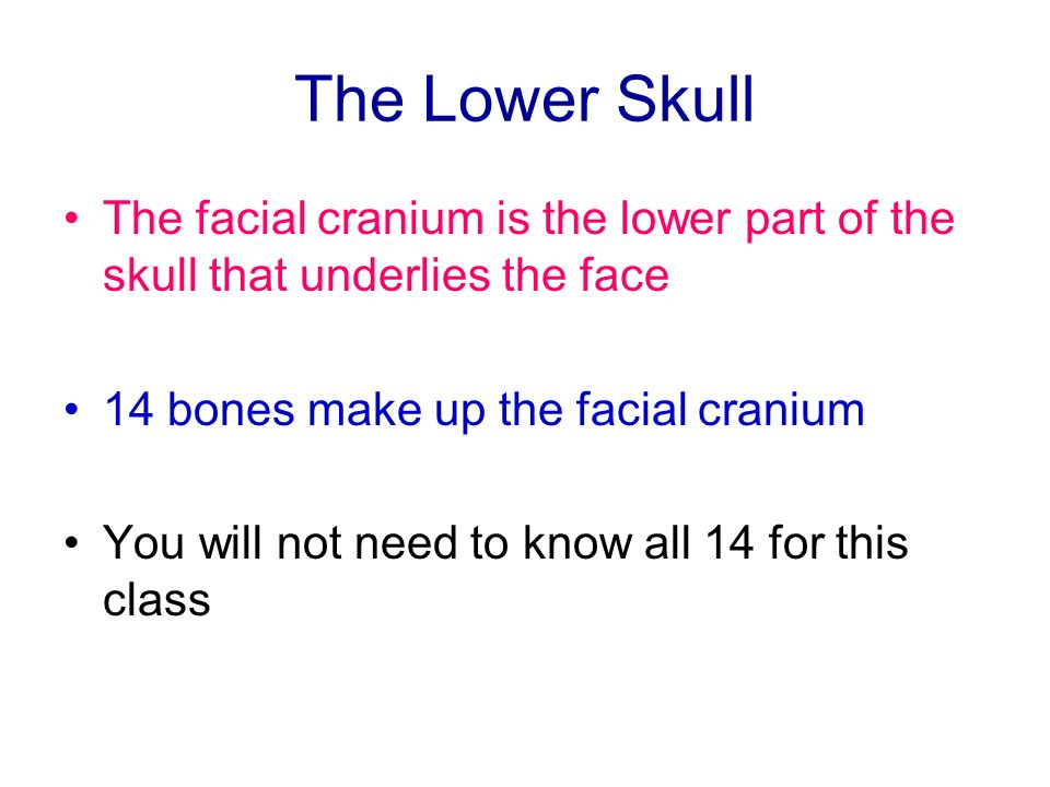 The Lower Skull The facial cranium is the lower part of the skull that underlies the face 14 bones make up the facial cranium You will not need to kno