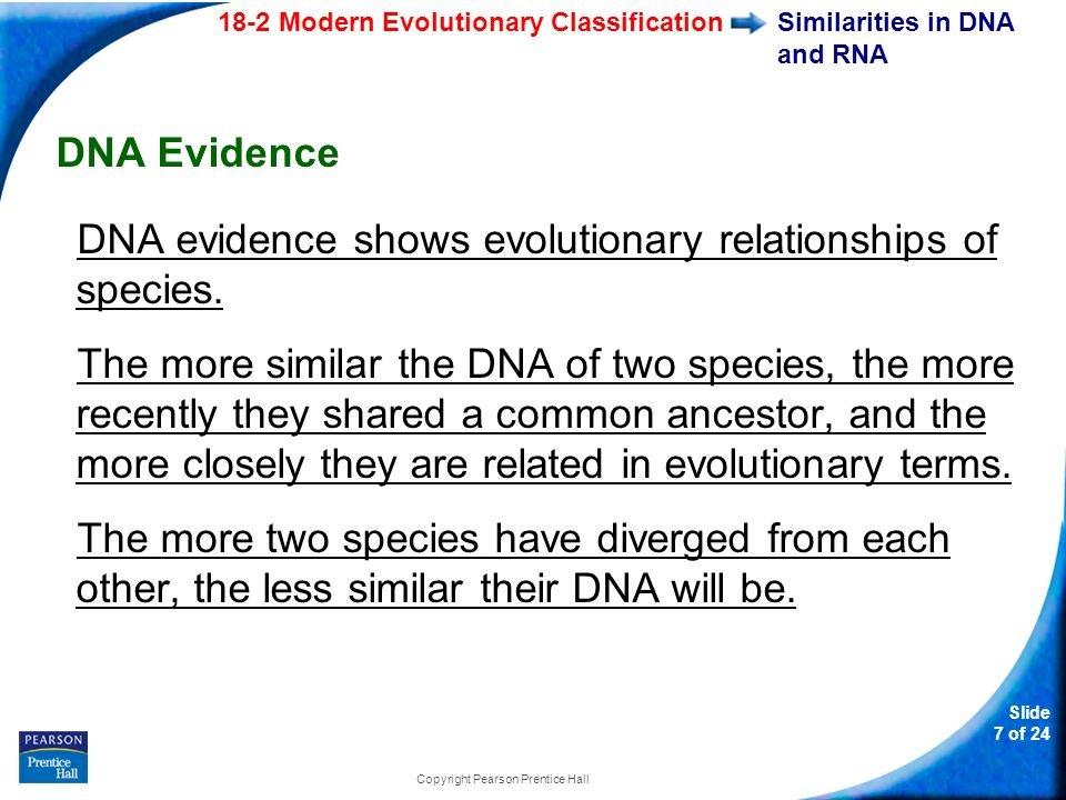 18-2 Modern Evolutionary Classification Slide 7 of 24 Copyright Pearson Prentice Hall Similarities in DNA and RNA DNA Evidence DNA evidence shows evol