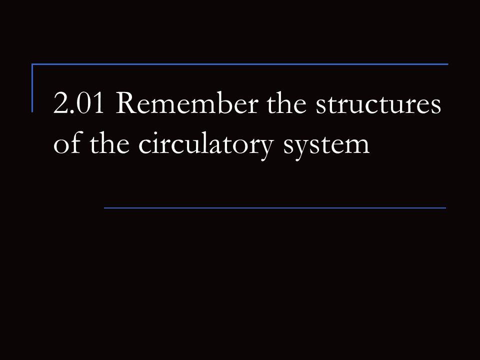 2.01 Remember the structures of the circulatory system 12 Leukocytes Granulocytes Neutrophils Eosinophils Basophils