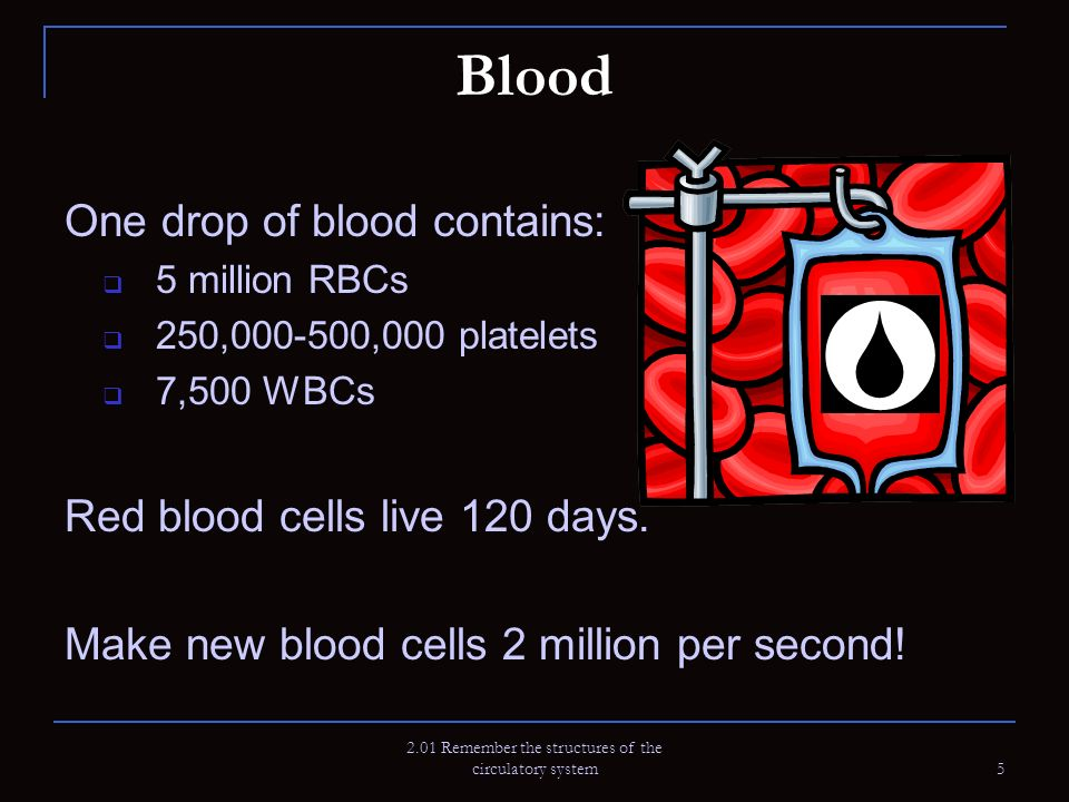 Blood One drop of blood contains: 5 million RBCs 250,000-500,000 platelets 7,500 WBCs Red blood cells live 120 days. Make new blood cells 2 million pe