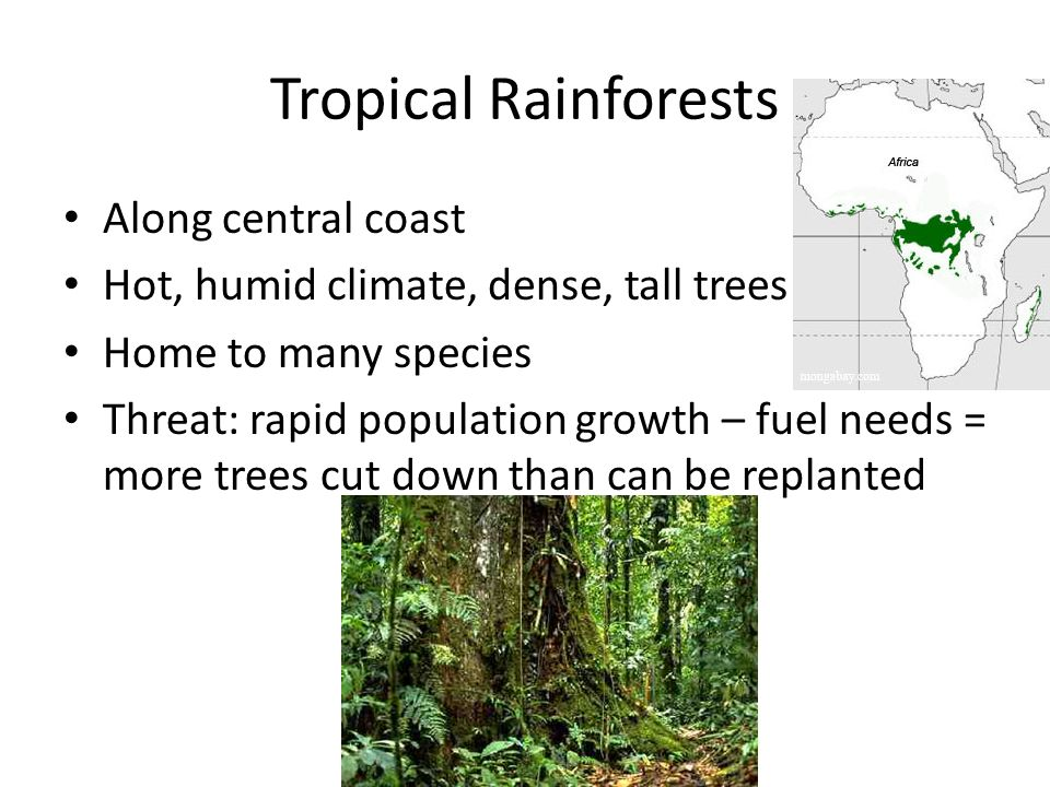 Tropical Rainforests Along central coast Hot, humid climate, dense, tall trees Home to many species Threat: rapid population growth – fuel needs = mor