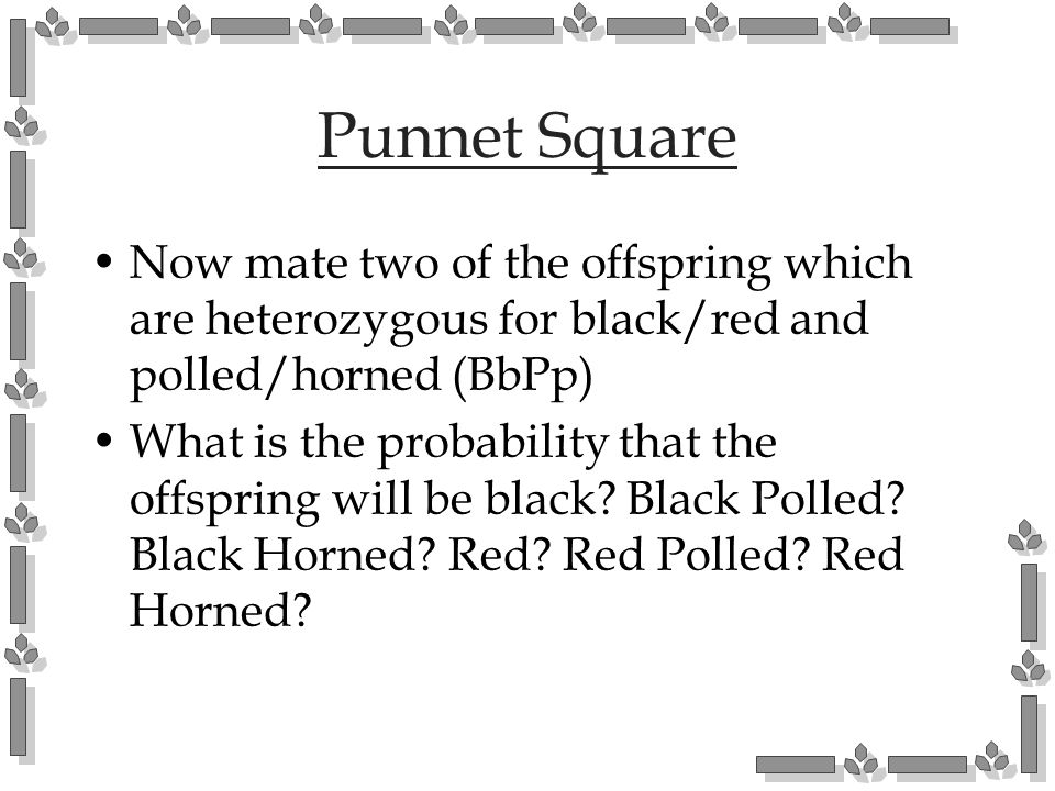 Punnet Square Now mate two of the offspring which are heterozygous for black/red and polled/horned (BbPp) What is the probability that the offspring w