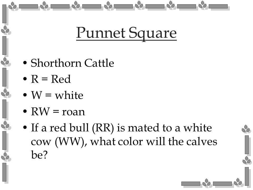 Punnet Square How do you do a punnet square with multiple genes.