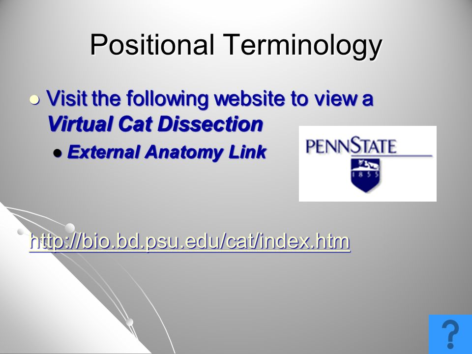 Visit the following website to view a Virtual Cat Dissection Visit the following website to view a Virtual Cat Dissection External Anatomy Link Extern