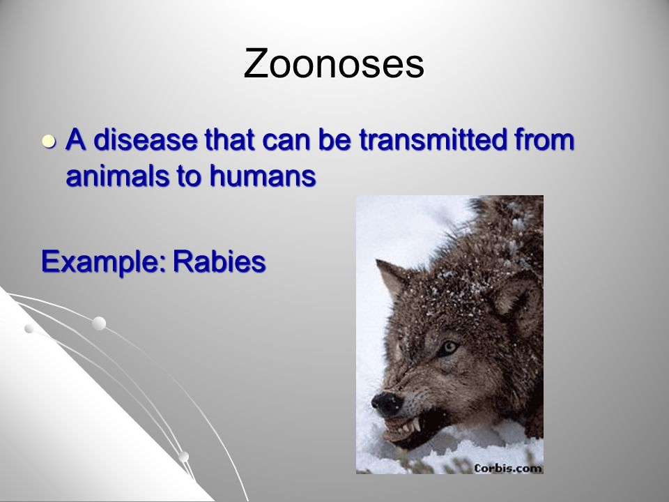 Zoonoses A disease that can be transmitted from animals to humans A disease that can be transmitted from animals to humans Example: Rabies