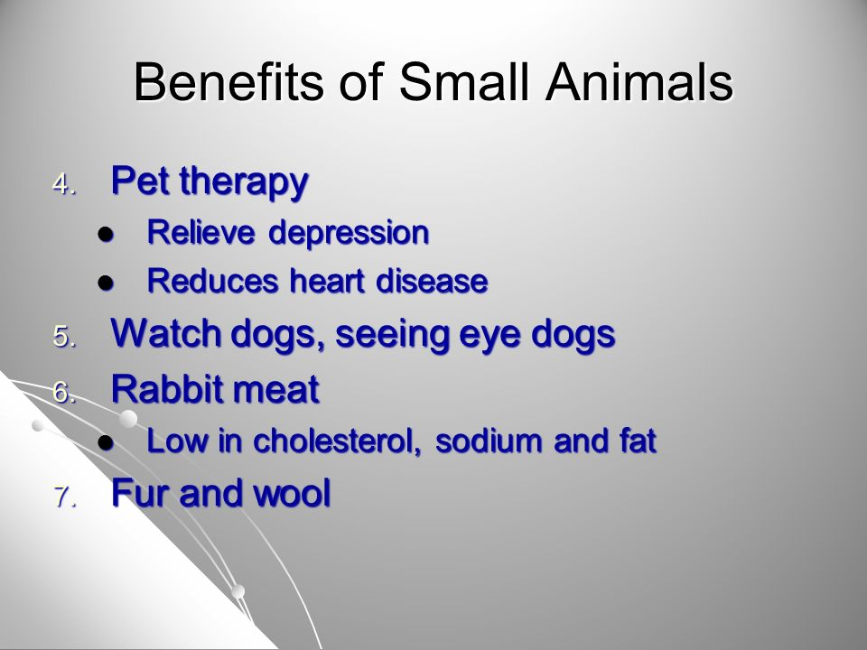 Benefits of Small Animals 8.Exhibition 9.