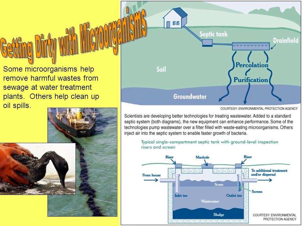 Some microorganisms help remove harmful wastes from sewage at water treatment plants. Others help clean up oil spills.