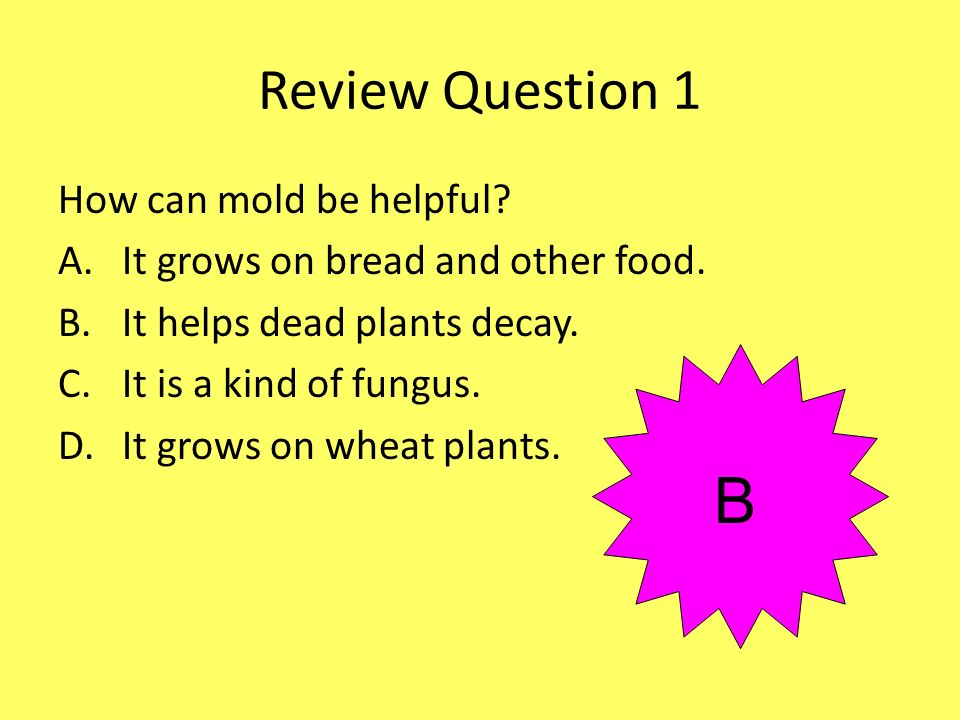 Review Question 1 How can mold be helpful? A.It grows on bread and other food. B.It helps dead plants decay. C.It is a kind of fungus. D.It grows on w