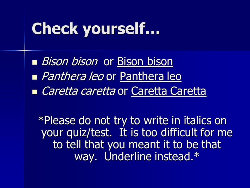 Check yourself… Bison bison or Bison bison Bison bison or Bison bison Panthera leo or Panthera leo Panthera leo or Panthera leo Caretta caretta or Car