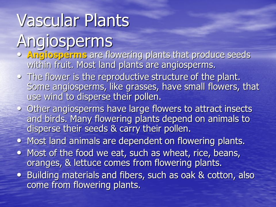 Vascular Plants Diagram Vascular Plants Angiosperms