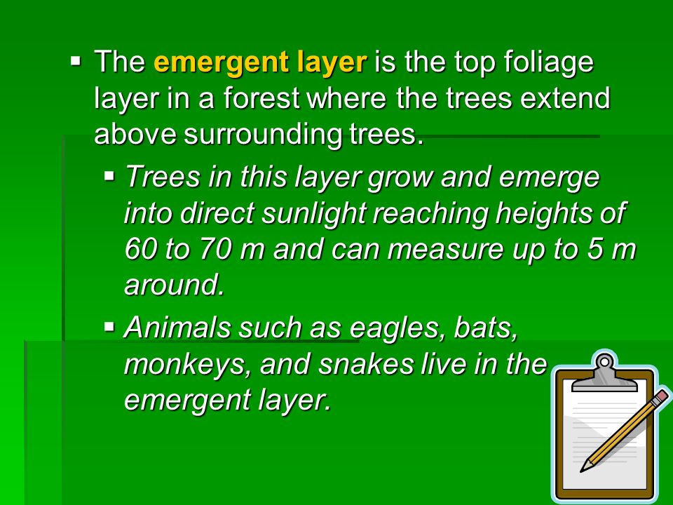 The emergent layer is the top foliage layer in a forest where the trees extend above surrounding trees. The emergent layer is the top foliage layer in