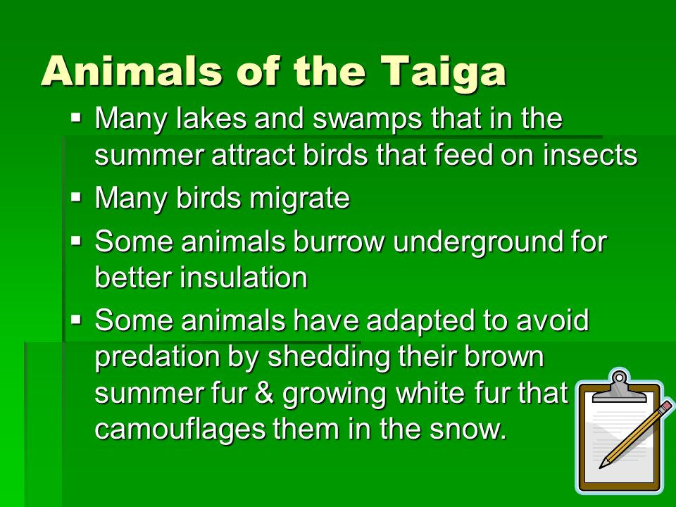 Animals of the Taiga Many lakes and swamps that in the summer attract birds that feed on insects Many lakes and swamps that in the summer attract bird