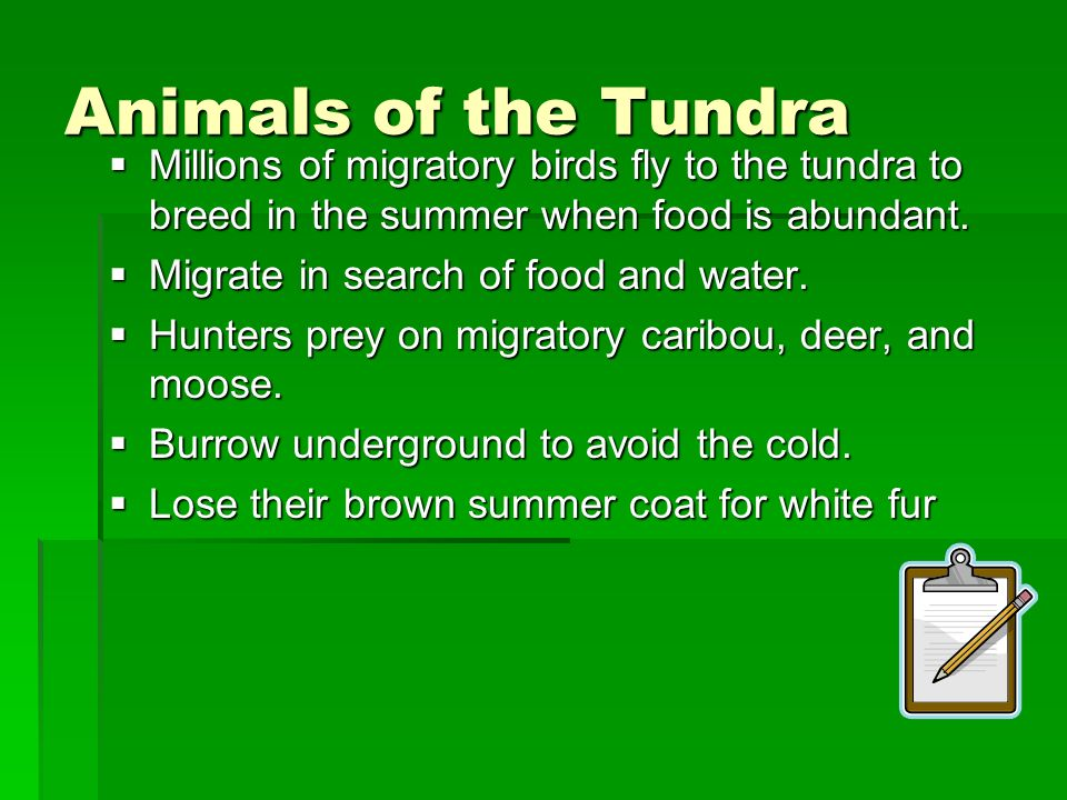 Animals of the Tundra Millions of migratory birds fly to the tundra to breed in the summer when food is abundant. Millions of migratory birds fly to t