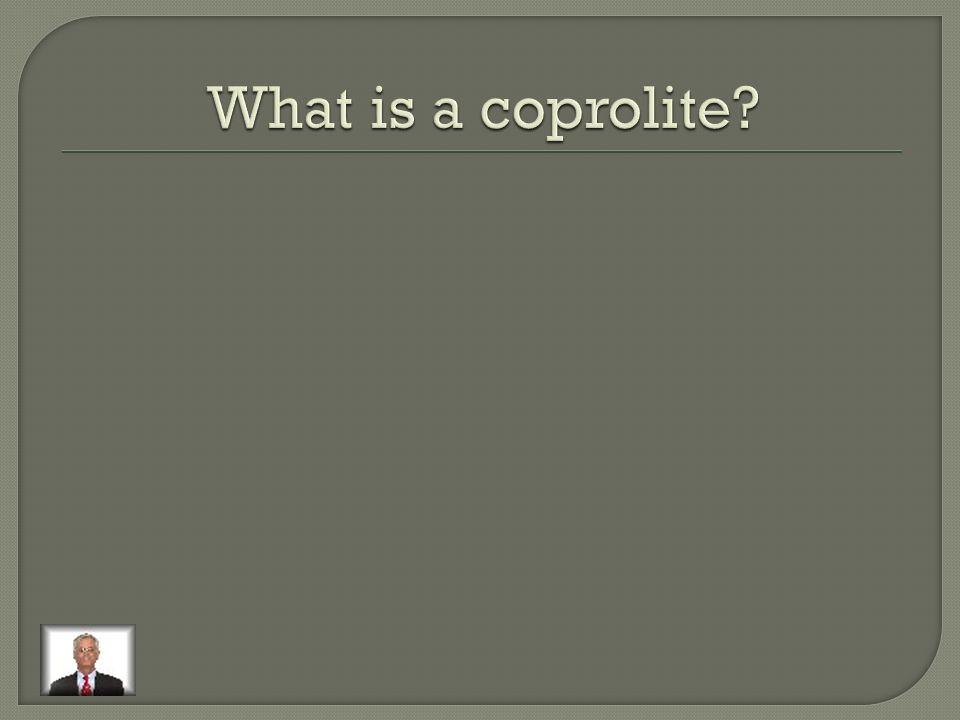 Coprolites (poop), burrows, and tracks.