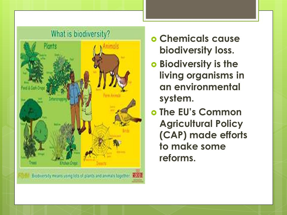 Biodiversity Chemicals cause biodiversity loss. Biodiversity is the living organisms in an environmental system. The EUs Common Agricultural Policy (C