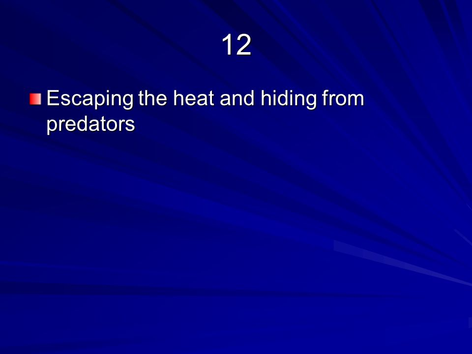 12 Escaping the heat and hiding from predators