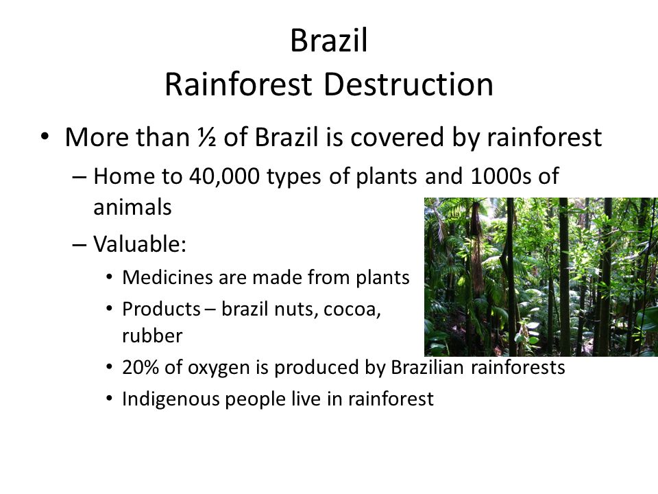 Brazil Rainforest Destruction More than ½ of Brazil is covered by rainforest – Home to 40,000 types of plants and 1000s of animals – Valuable: Medicin