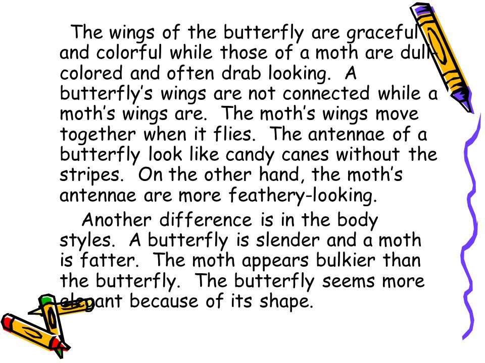 The wings of the butterfly are graceful and colorful while those of a moth are dull- colored and often drab looking. A butterflys wings are not connec