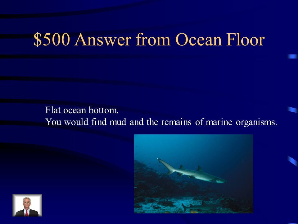 $500 Question from Ocean Floor What is the abyssal plain? Name one thing you would find if you traveled there?