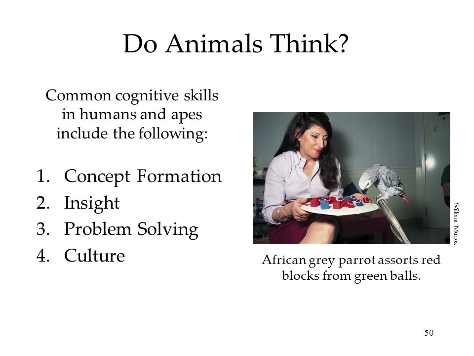 50 Do Animals Think? Common cognitive skills in humans and apes include the following: 1.Concept Formation 2.Insight 3.Problem Solving 4.Culture Afric