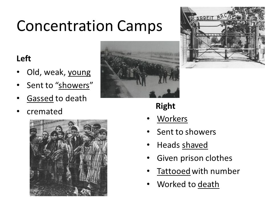 Concentration Camps Left Old, weak, young Sent to showers Gassed to death cremated Right Workers Sent to showers Heads shaved Given prison clothes Tat