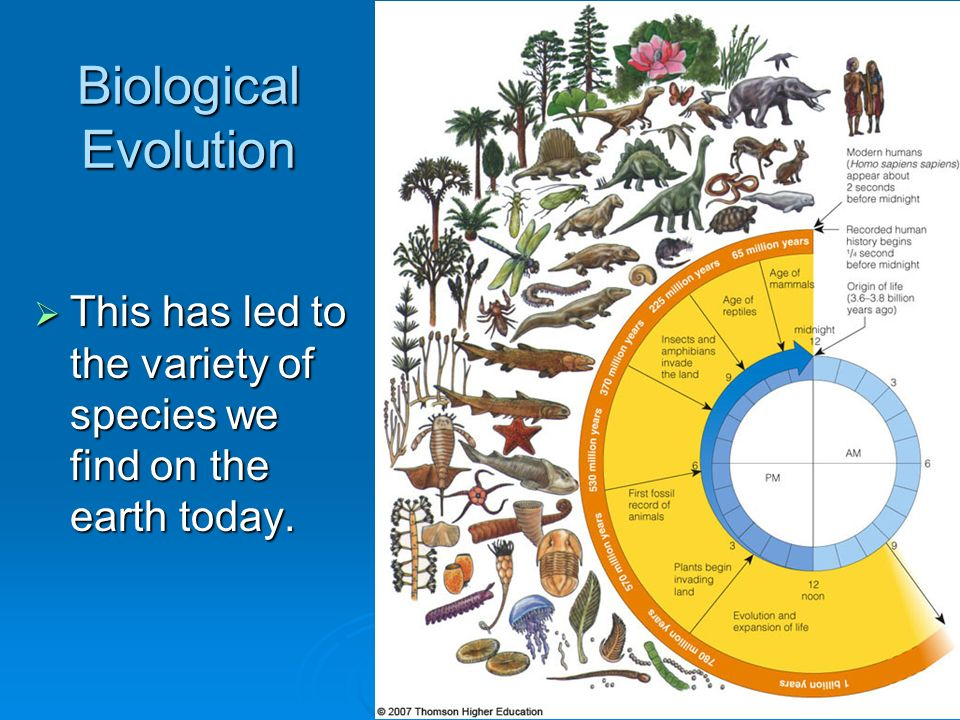 Biological Evolution This has led to the variety of species we find on the earth today.