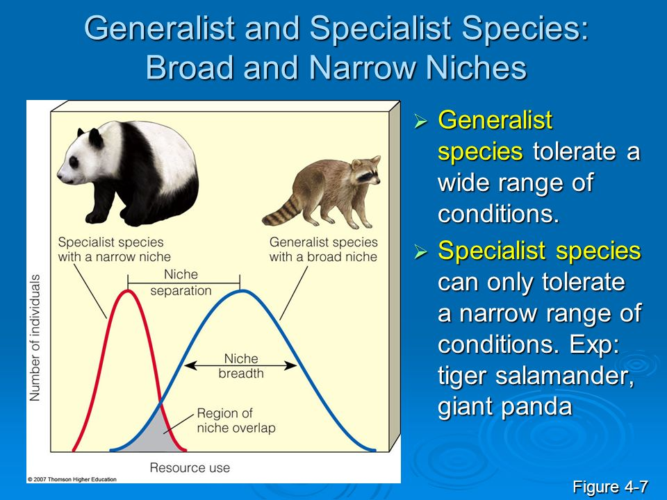 Generalist and Specialist Species: Broad and Narrow Niches Generalist species tolerate a wide range of conditions. Generalist species tolerate a wide