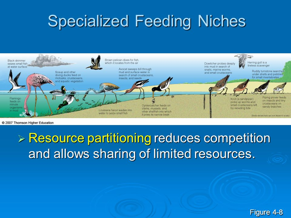 Specialized Feeding Niches Resource partitioning reduces competition and allows sharing of limited resources.