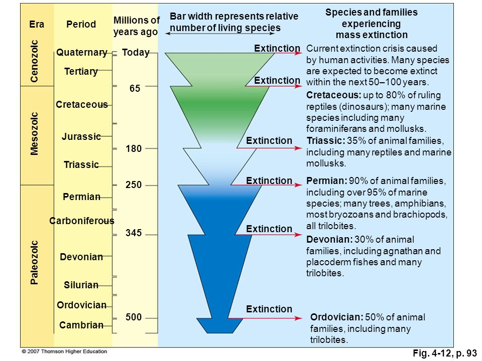 Fig. 4-12, p. 93 Tertiary Bar width represents relative number of living species EraPeriod Species and families experiencing mass extinction Millions