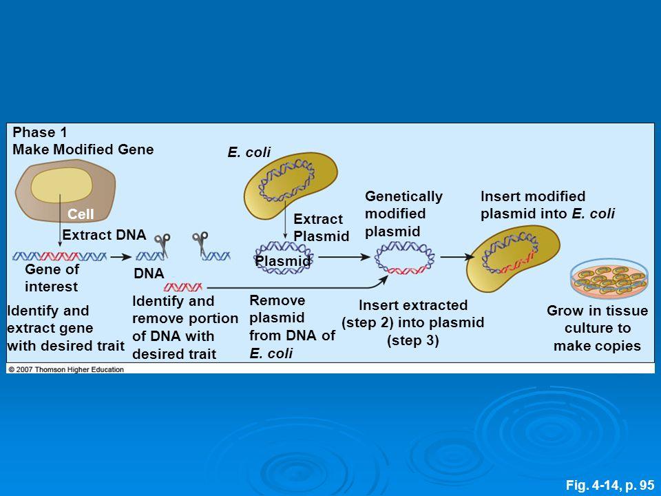 Fig.4-14, p. 95 Insert modified plasmid into E.