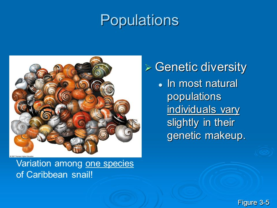 Populations Genetic diversity Genetic diversity In most natural populations individuals vary slightly in their genetic makeup. In most natural populat