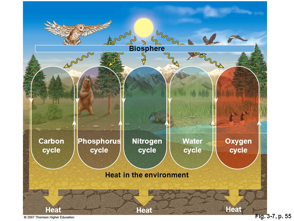 Fig. 3-7, p. 55 Nitrogen cycle Biosphere Heat in the environment Heat Phosphorus cycle Carbon cycle Oxygen cycle Water cycle